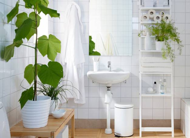 shower-plants